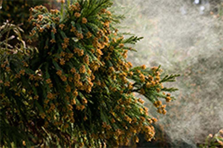 花粉飛散前からのお薬の服用。――花粉症を「予防」する――